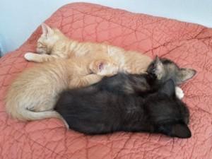 4 chatons