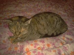 2015-12-30 chatte trouvée