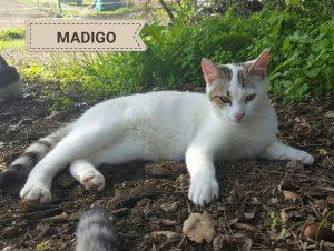 2016-11-19-madigo-2